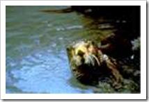 exxon_valdez_oil_spill_1