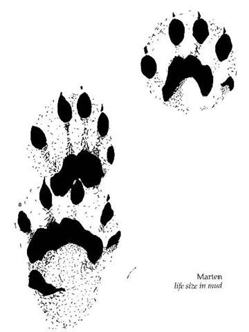 Marten tracks 02 13 08 athabascan word of the week raven s ruff