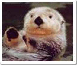 river_otter
