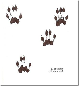 red_pine_squirrel_tracks_b&w