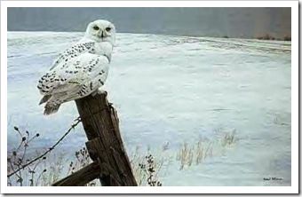 snowy_owl_painting
